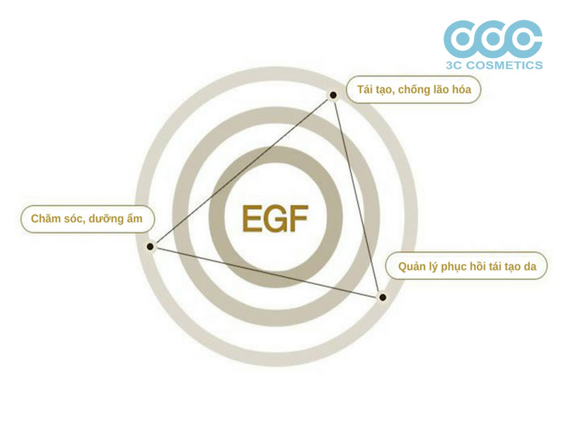 EGF là gì?