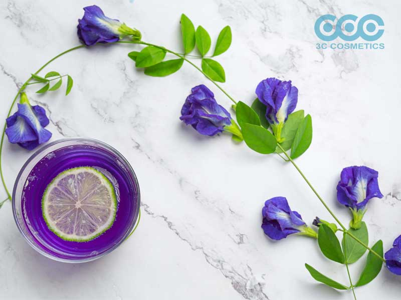 công dụng khi sử dụng hoa đậu biếc